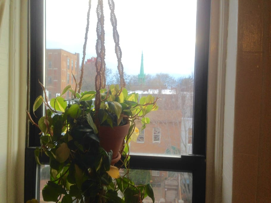 Hanging plants in the windows, and steeples in the distance —a nice view, indeed.