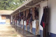 Quinta da Marinha Horses