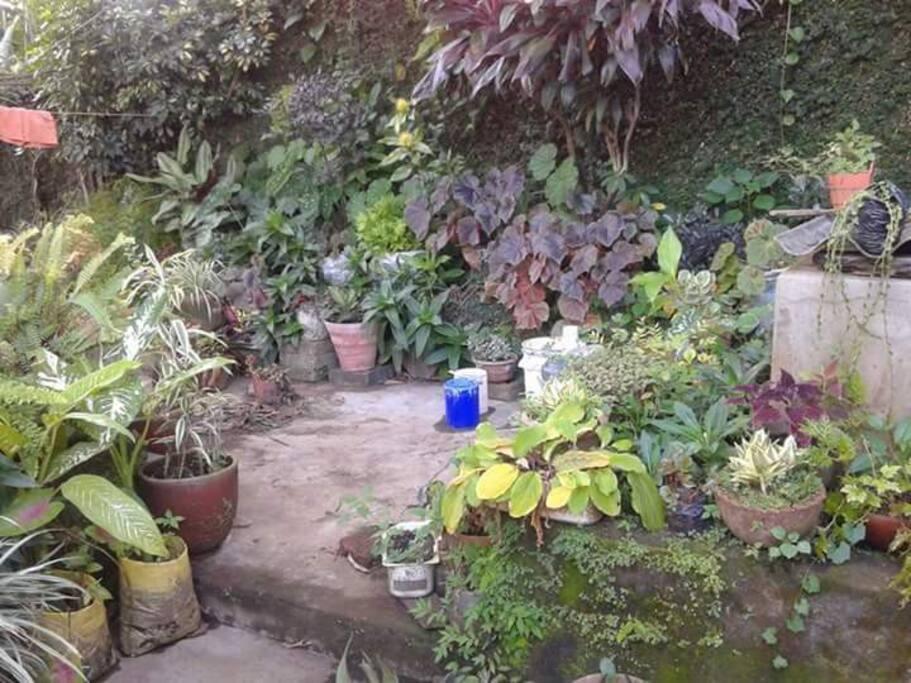 Jardines y areas verdes para descansar en hamacas.