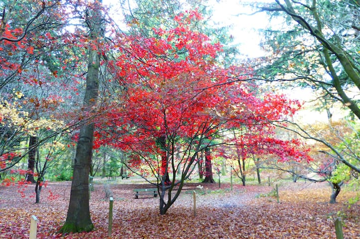 Autumn in Queenswood