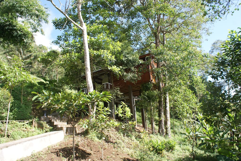 Side view of Candlenut Treehouse