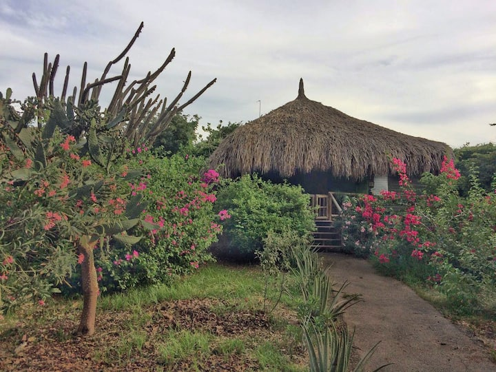 Eco-friendly palapa 'Ara'