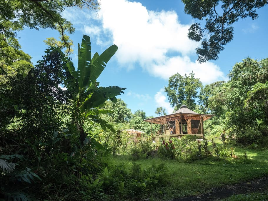 Very secluded and surrounded only by jungle forest.
