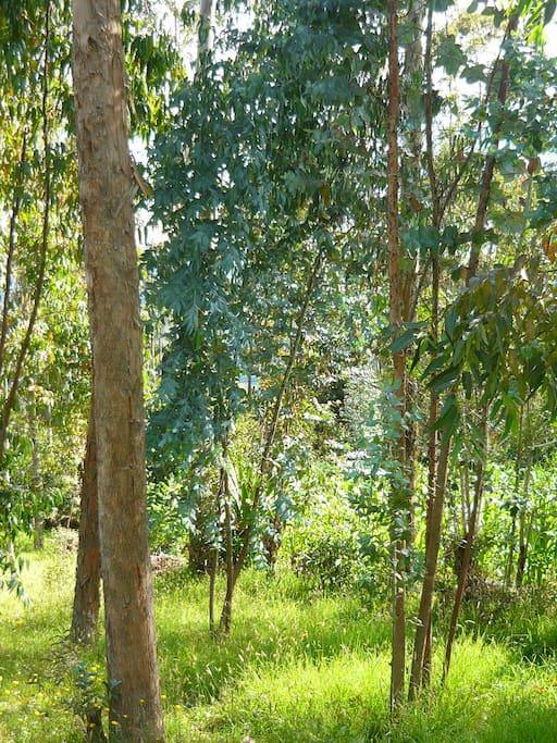 Caminatas por senderos de bosque