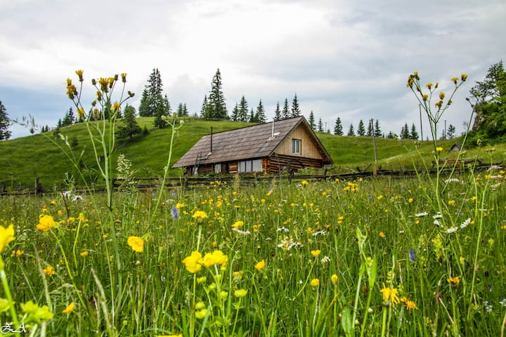 Fluturica Barnhouse-Cabin in the pristine meadow