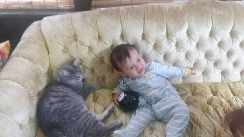 Cats and babies welcome!