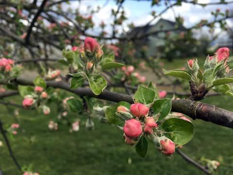 Hanger Farm - Orchards & Gardens, Spacious Retreat