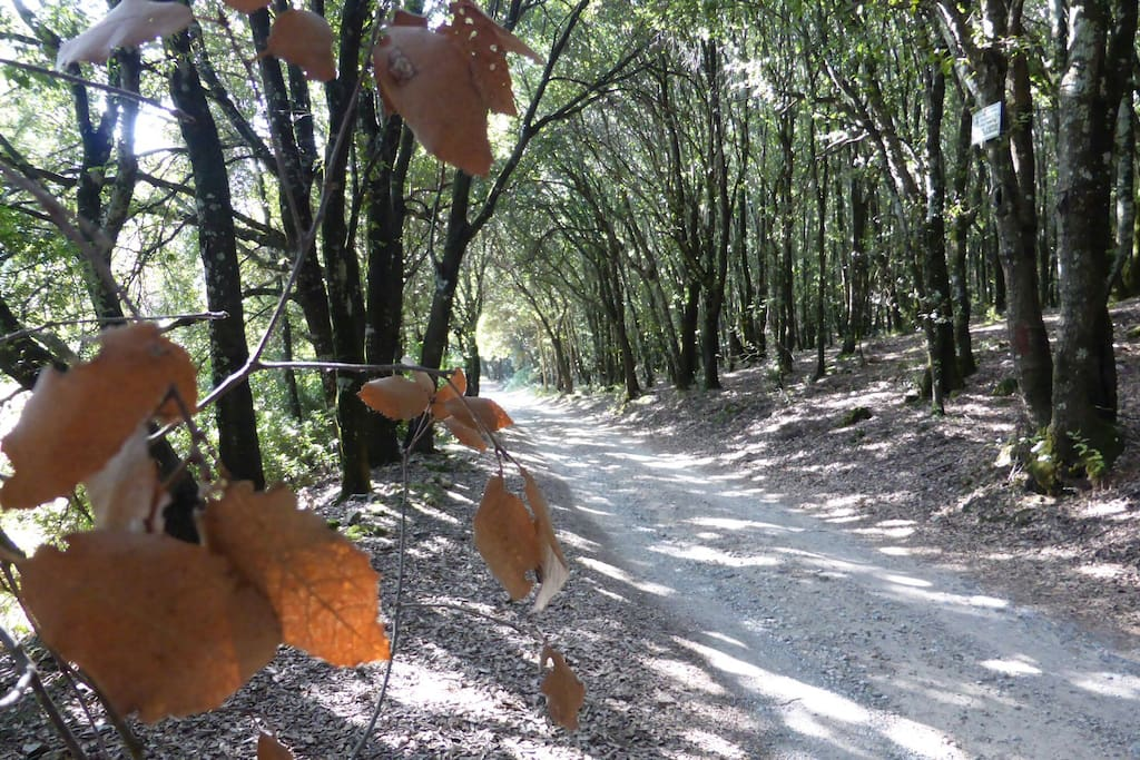 From September onwards the trails of San Benedetto will lead you to new horizons....