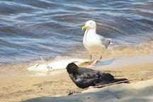 Slight difference of opinion as to who owns the fish dinner but they always end u;p sharing anyway.,