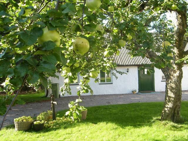 Lägenhet på landet 20 min utanför Halmstad - Laholm V - Byt