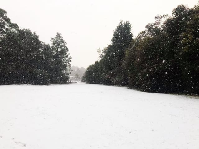 A beautiful unexpected snow fall in the reserve across the road from Werona.