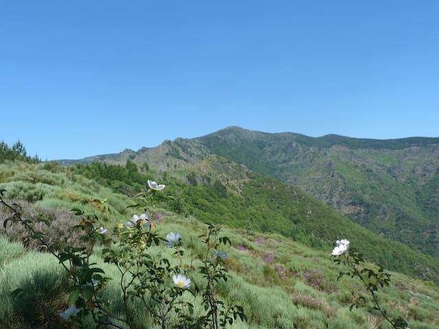 massif de l'Aigoual