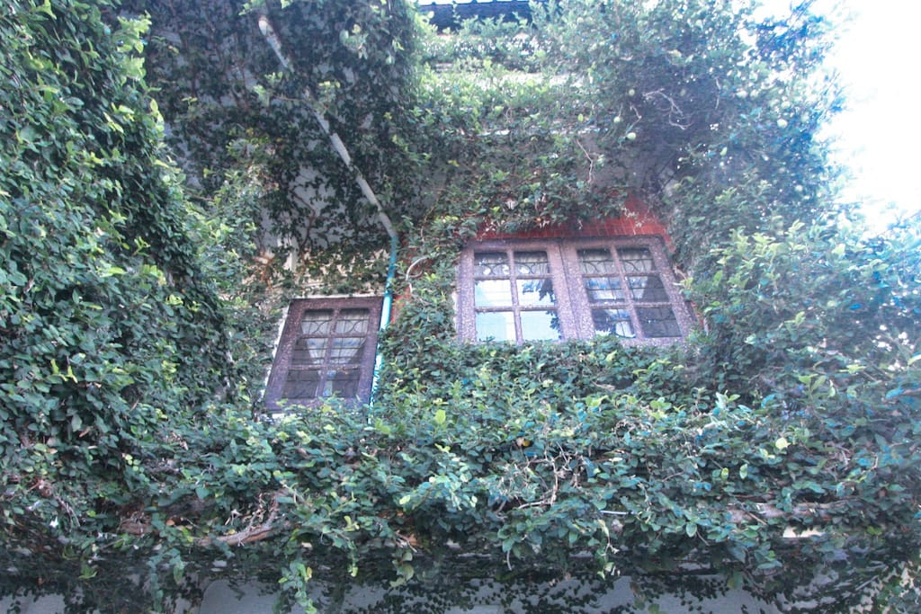 Classic and ivy embedded house.