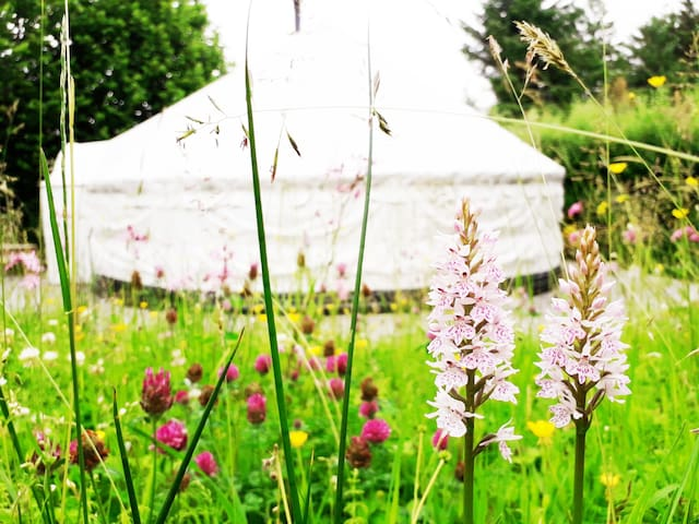 Pink Apple Orchard: Willow Yurt Glamping
