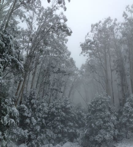 Snow on Mt Donna Buang