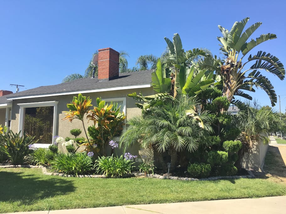 1700 sq ft home 7000 sq ft property, Giant Birds of paradise, plumeria tree and more!