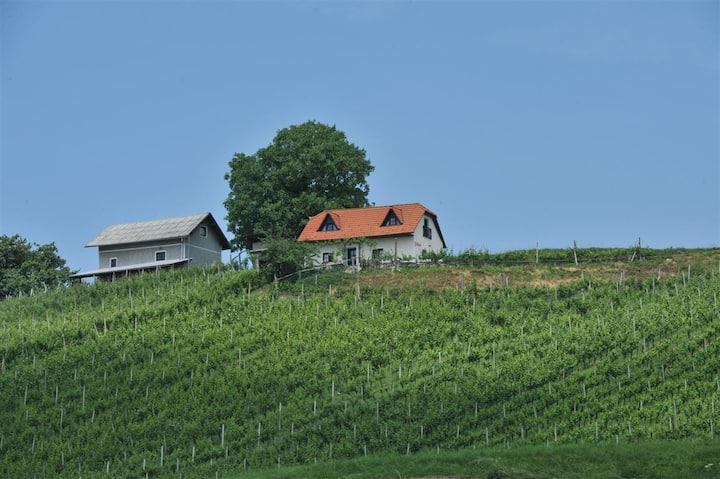 Vineyard cottage Zdolšek