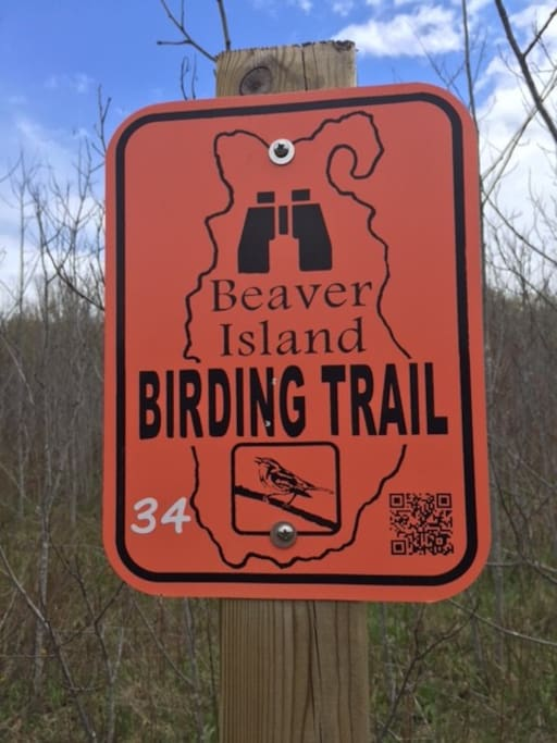 Camp 3 Trail is a Birding Trail ...take a walk.