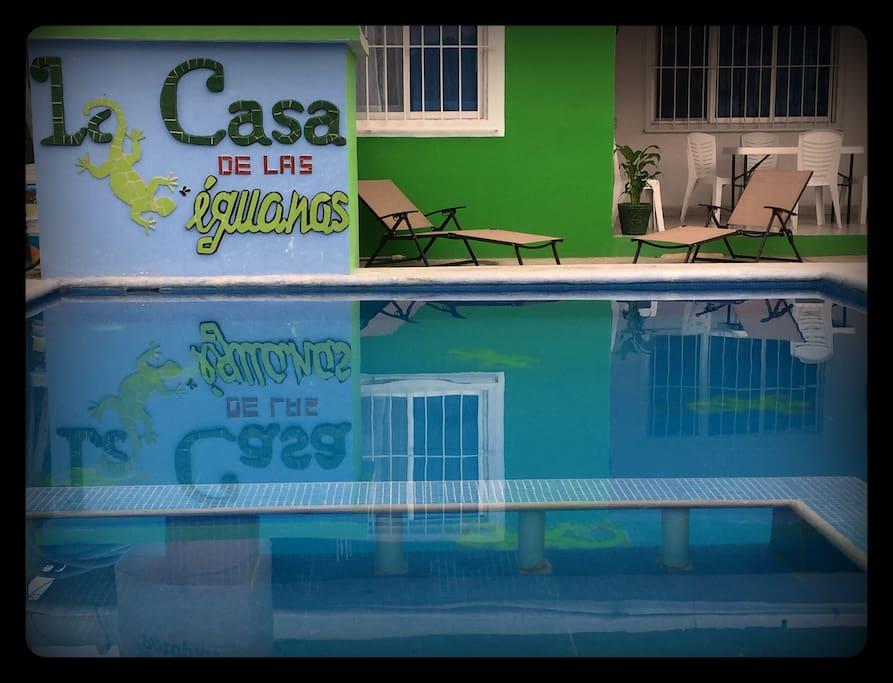 Pool area / Alberca