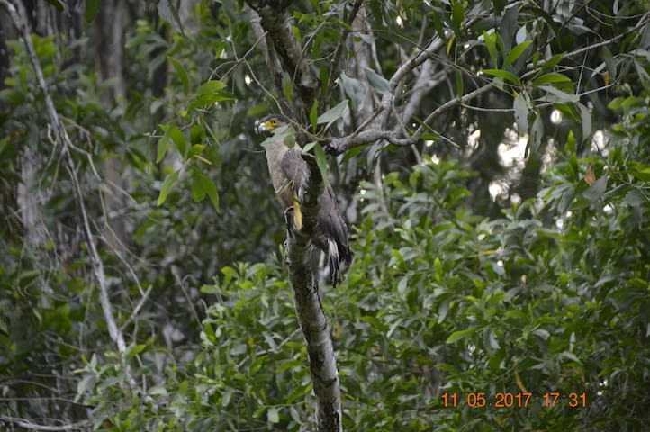 Nature Resort like home in Kuala lumpur