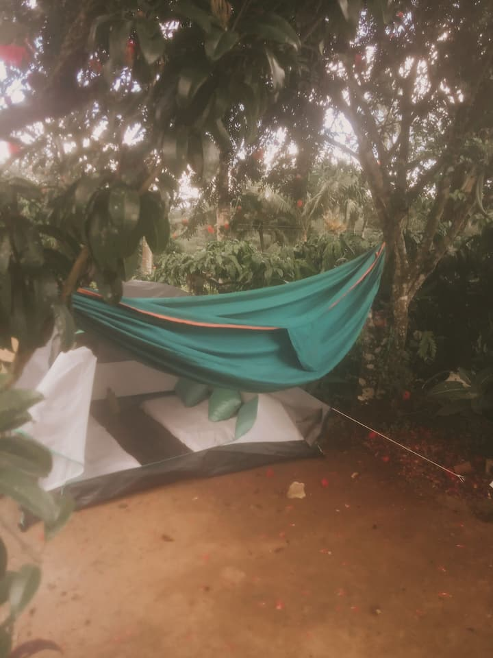 The Floresta - Backyard Campsite