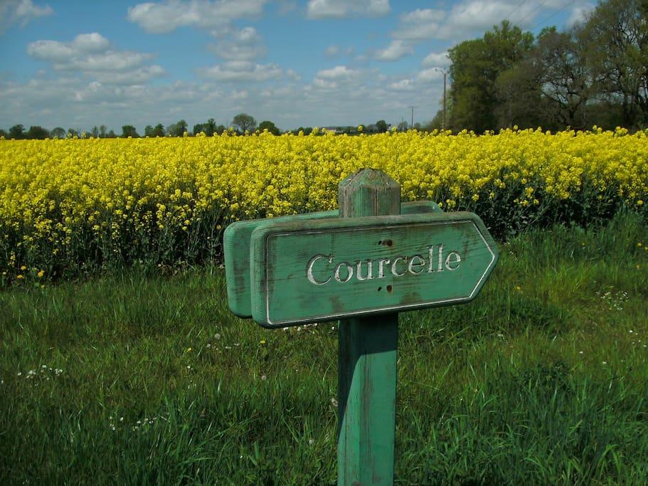 Les champs qui entourent la maison.