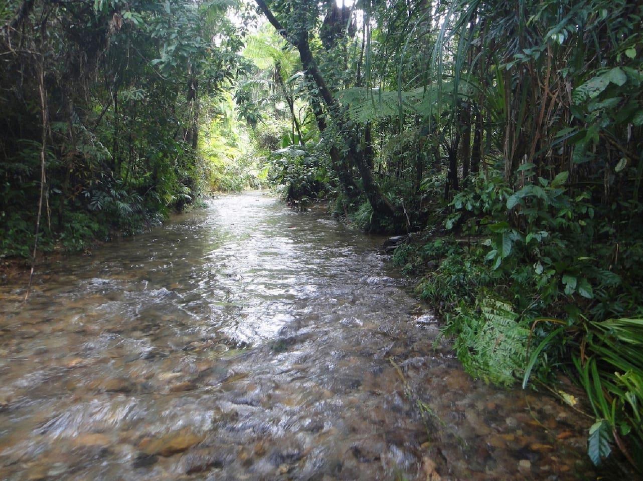 Private beautiful rainforest creek