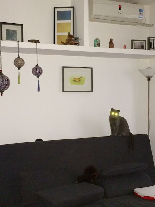 The cats will be living in the kitchen during your stay. Which is separated an on a different floor from the living, bedroom and bathroom.