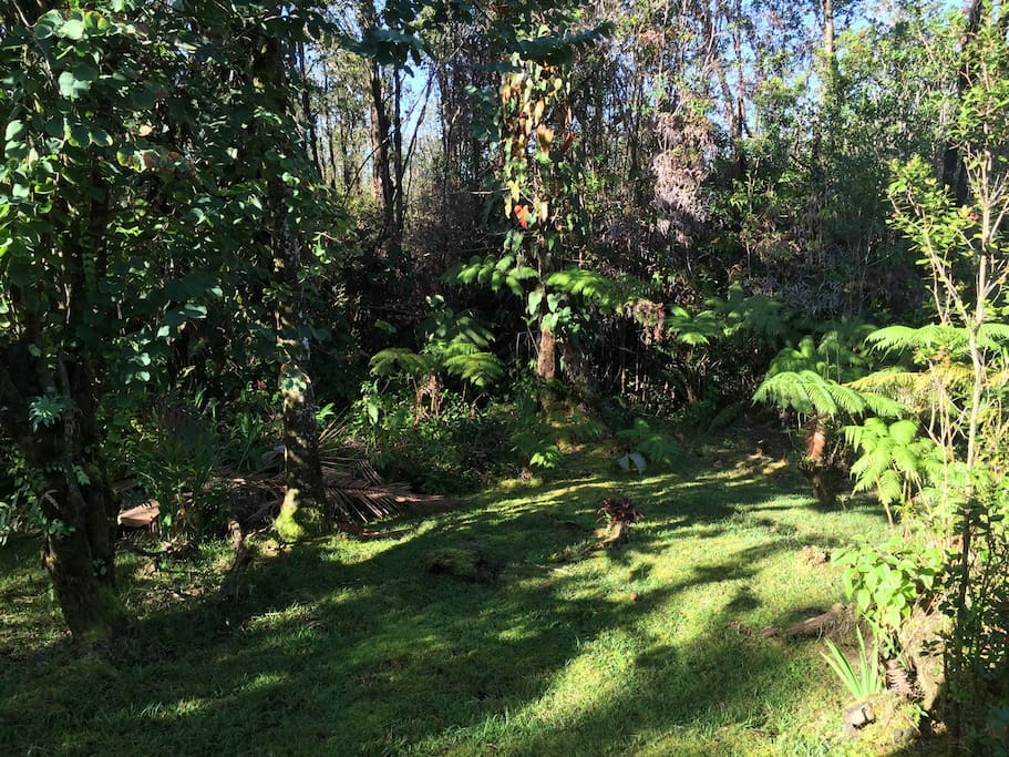 Rainforest On The Big Island: THE BIG ISLAND RAINFOREST COTTAGE