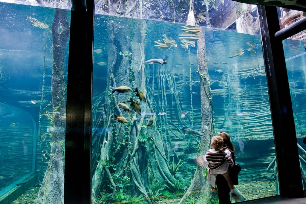 The Parque Explora has the aquarium with the largest collection of freshwater fish in Latin America.