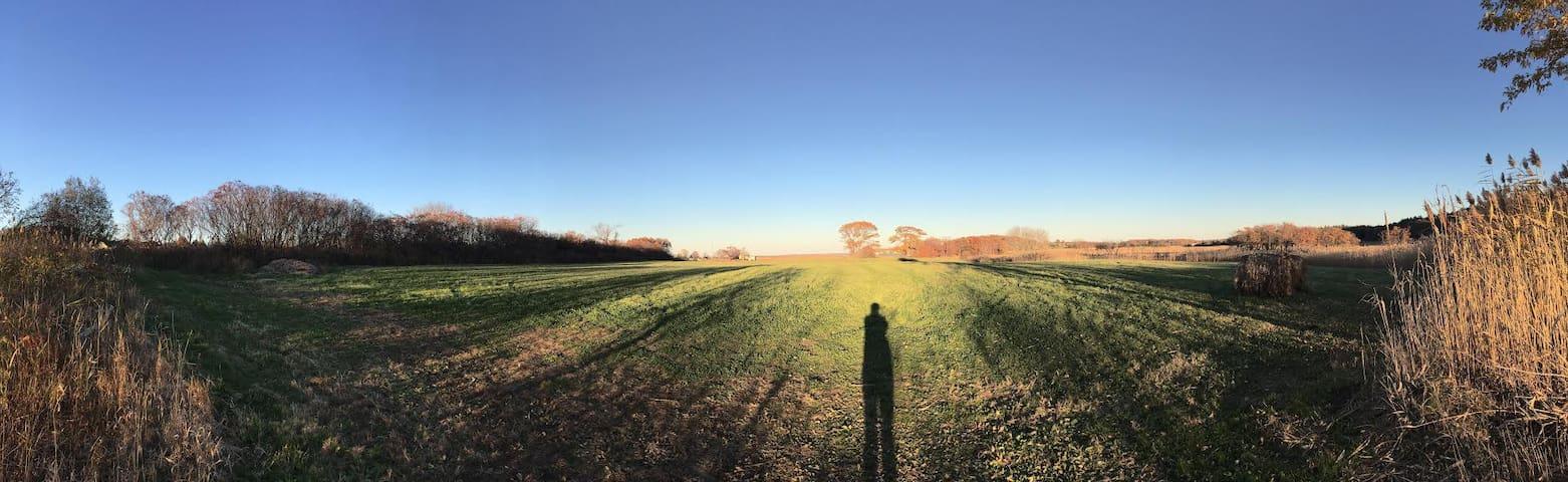 Back land - sunset