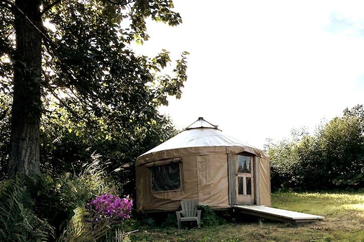 Homer Alaska Cottonwood Yurt