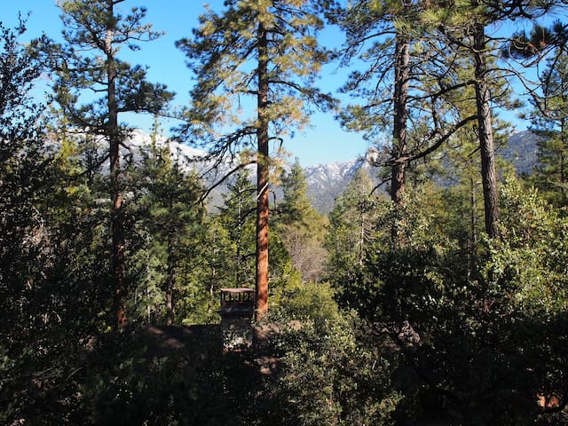 Baily's Forest Lodge - A Winemaker's Retreat! - Idyllwild-Pine Cove - Chatka