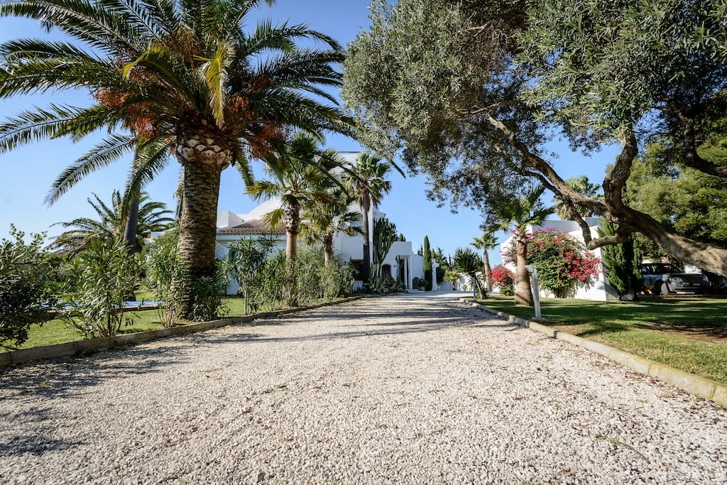 Palmenzufahrt zur Villa