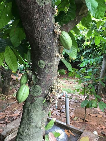 Cocoa Farm (AC) 3 km from Airport - 3 bedroom