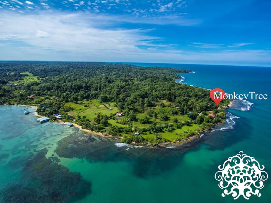 Beautiful Bocas...shows Monkey Tree location