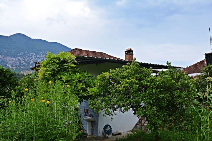 Comfortable Gecko Rural House