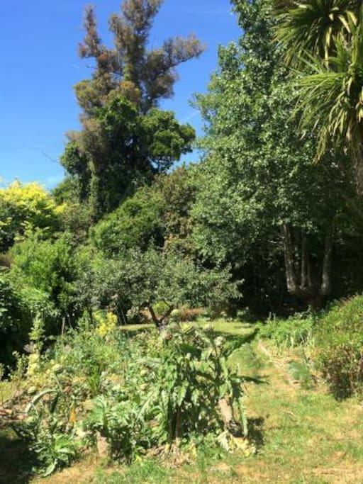 Organic gardens and Rata tree