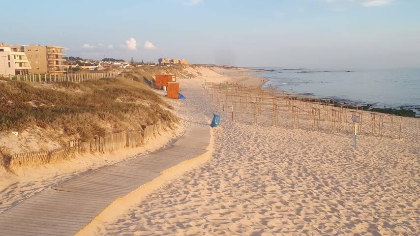 Beach and Birds