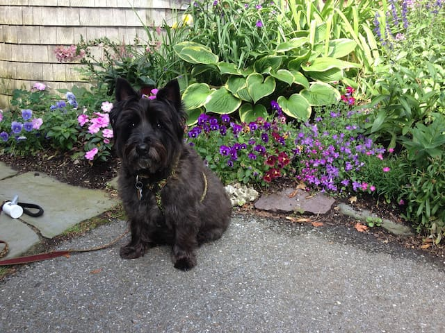 Woody, our very friendly, mellow  Cairn Terrier. He's 10. He stays in our living quarters. Woody is a non-shedding &  hypoallergenic breed.