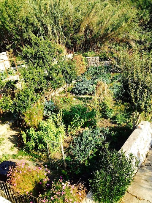 Backyard garden view