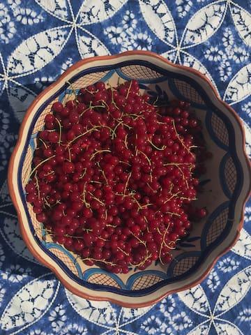 summer fruit for the taking