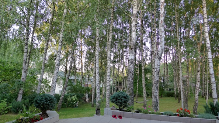 House in a Birch Grove
