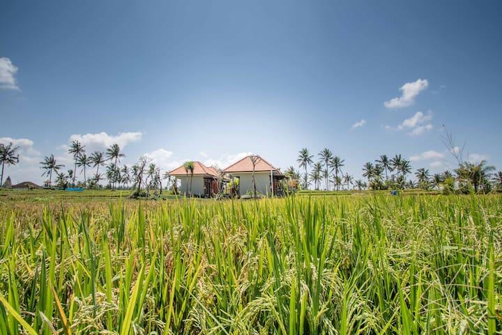 Ubud 4BR+Private pool endless ricefield view+B'fs