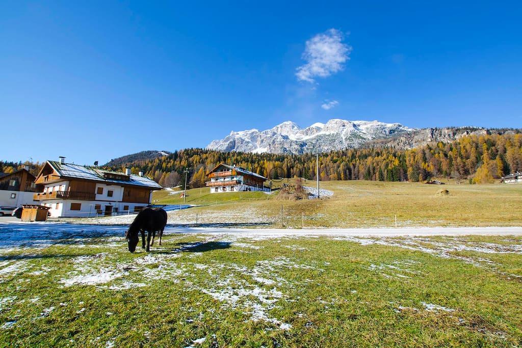 Appartamenti In Affitto A Cortina