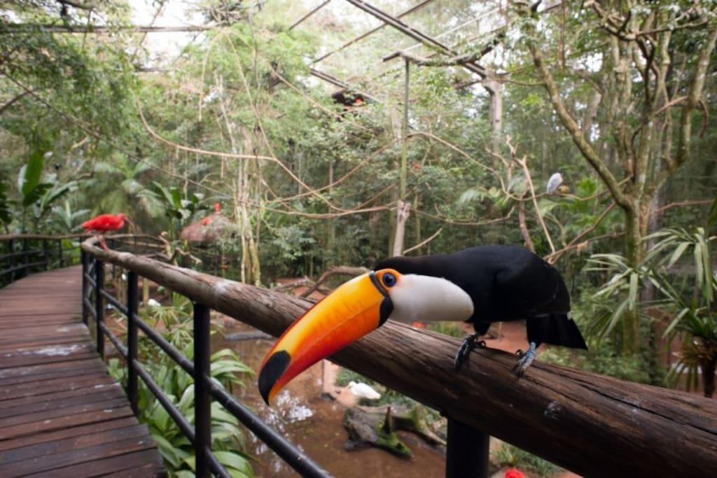 Bird Park in Iguassu Falls 11 km de Gardenia House