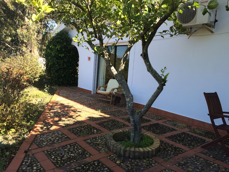 Lemon tree patio