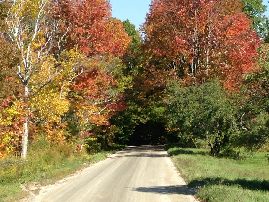 Fall foliage on Landgrove Rd.