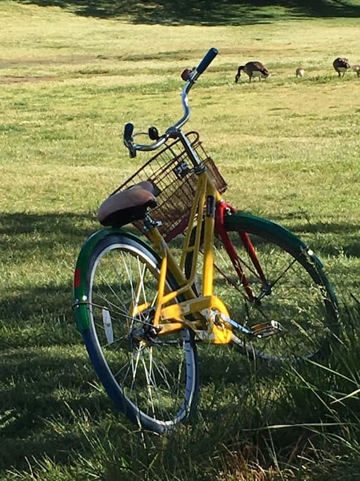 A Free Google bike and baby geese in nearby Shoreline Lake park