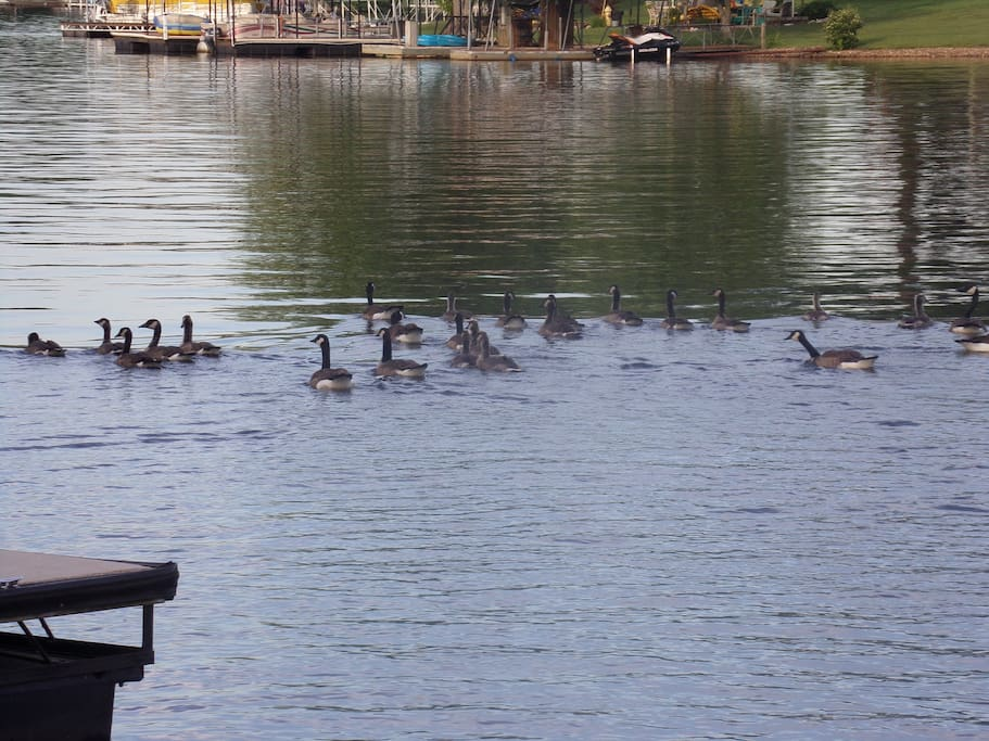 Visitors to the Lake